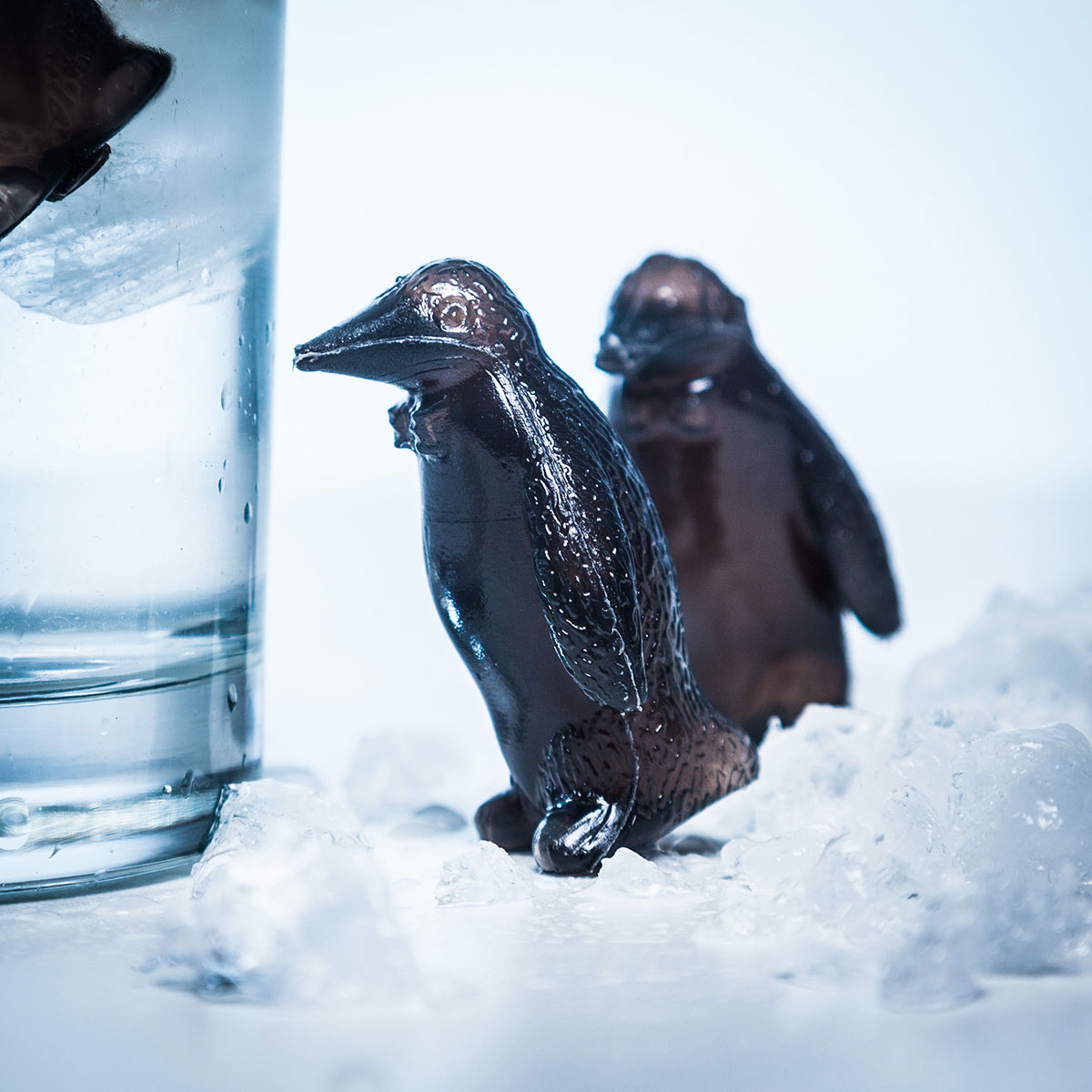 Pinguïn coolers