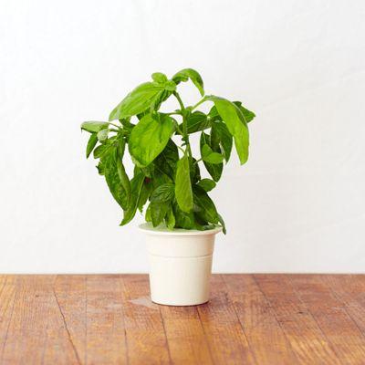 Navulverpakkingen voor Click & Grow Smarter kruidentuin voor binnen