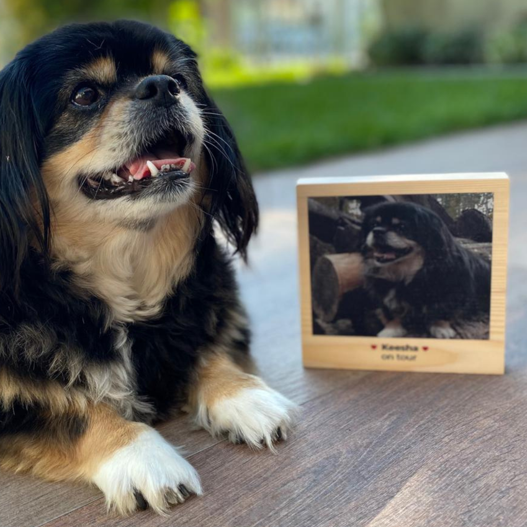 Huisdieren cadeau vierkantige foto op hout met tekst
