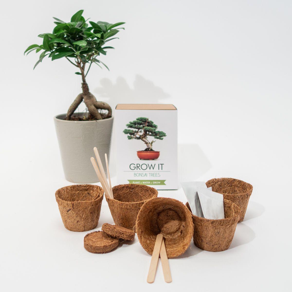 Grow It Bonsai Boom