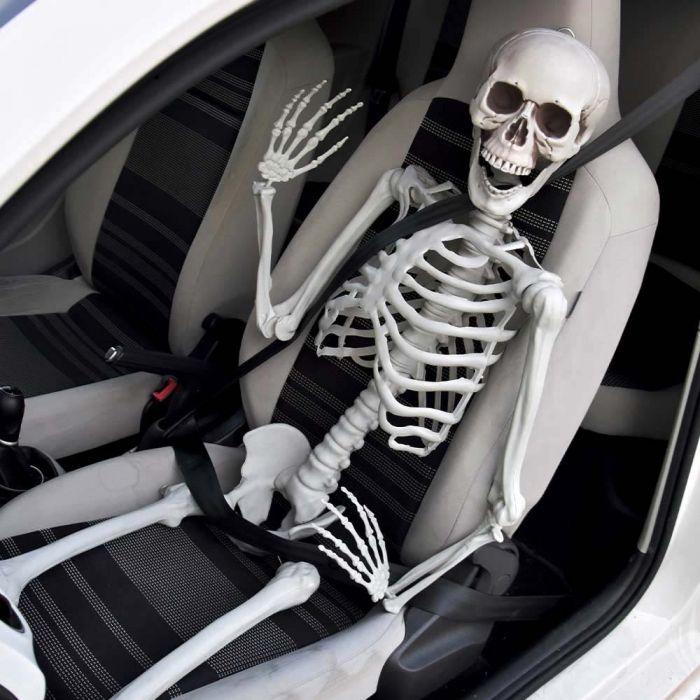 Skelet levensgroot