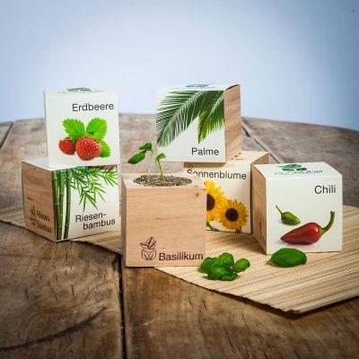 Cadeau voor haar - ecocube - planten in houtblokken
