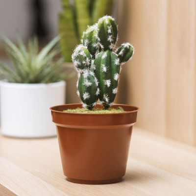 Home Gadgets - Cactus Mini Kluis
