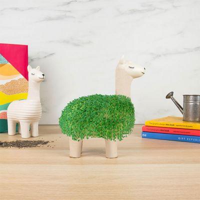 Decoratie - De groene lama