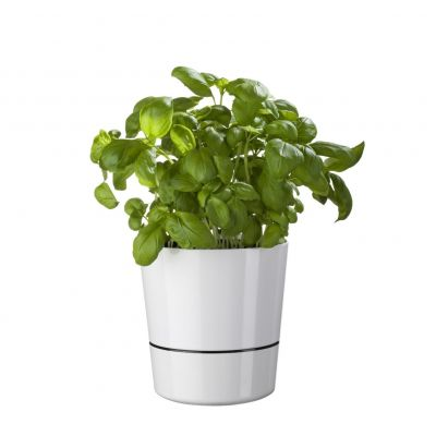 Herb Hydro bloempot